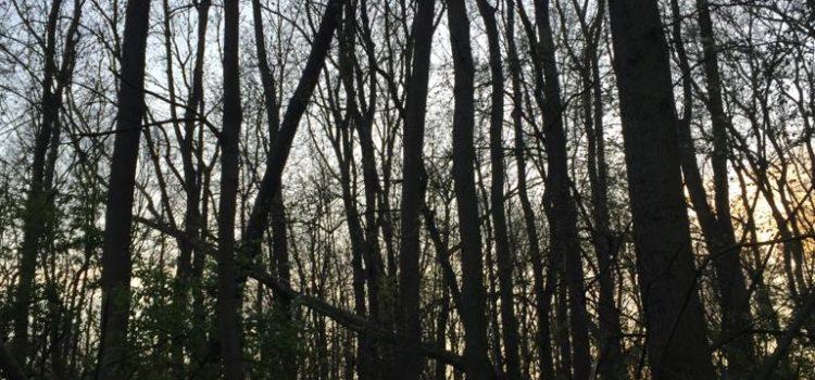 7. 5. 2021 Technická pomoc – odstranění stromu